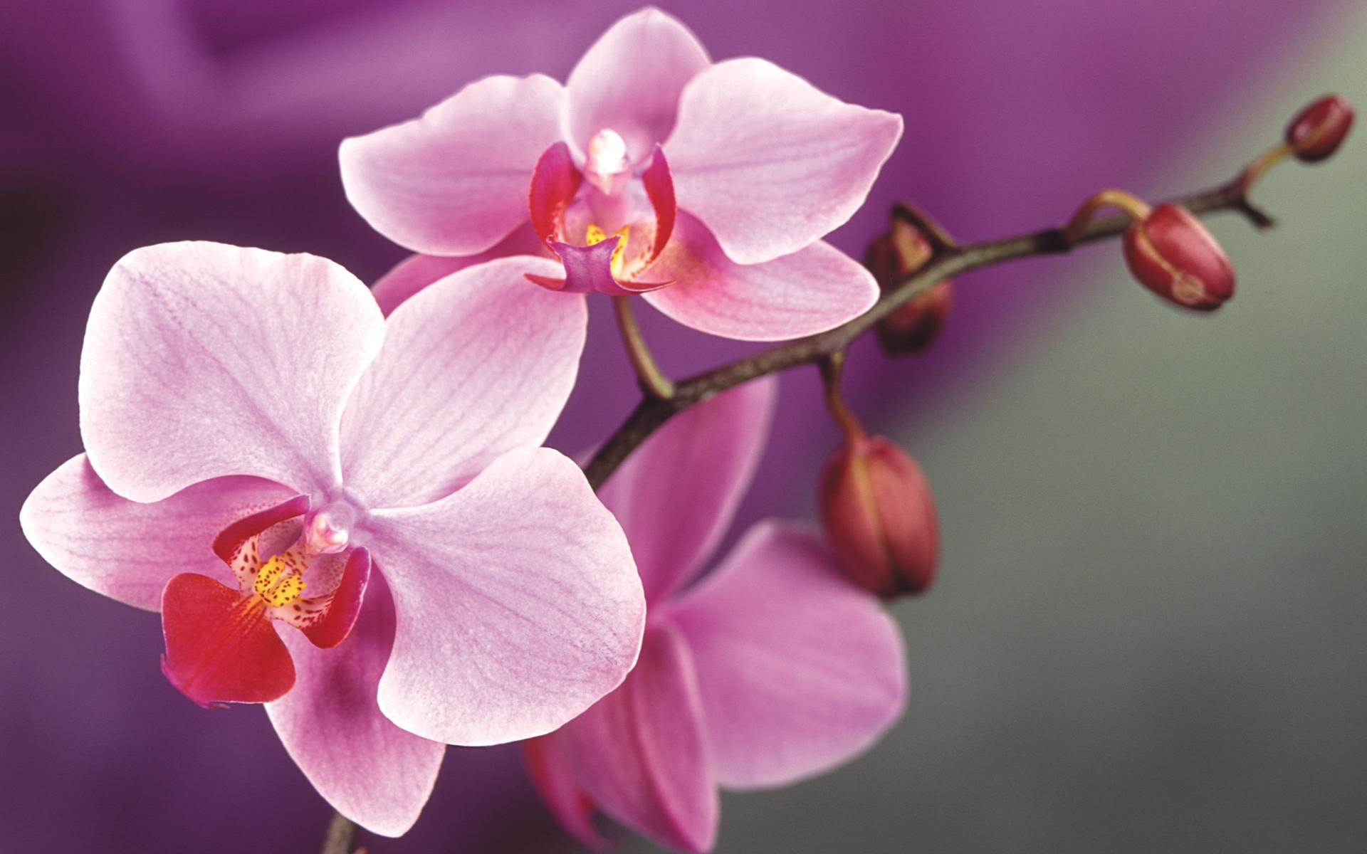 orchids-macro.jpg